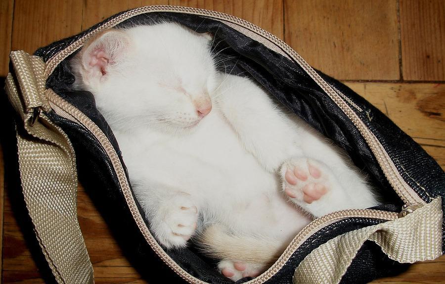 chat qui dort dans un sac