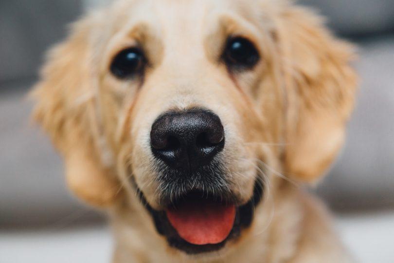 prendre soin de son chien