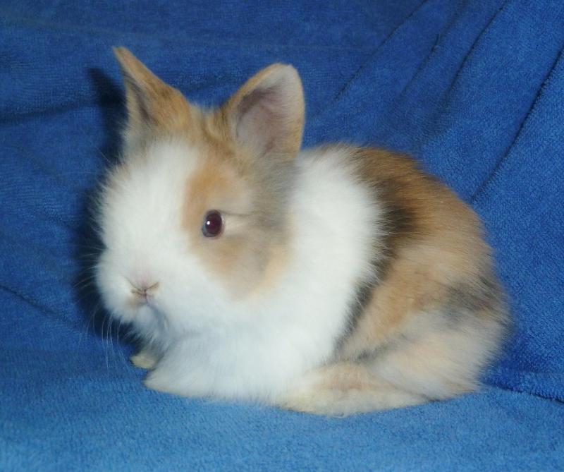 quel lapin choisir