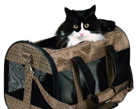 abituer votre chat à son sac de transport