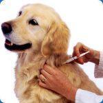 santé du chien