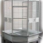 Cage d'angle du Gris du Gabon