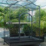 Grande cage du Gris du Gabon