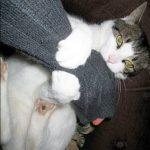 chat qui mord pour jouer