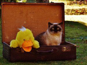 comment voyager avec son chat