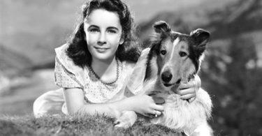 lassie chien fidèle