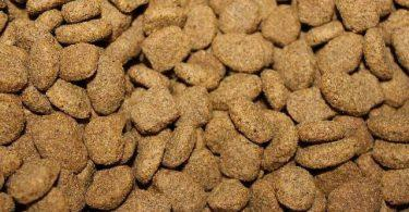 guide croquettes bio chien